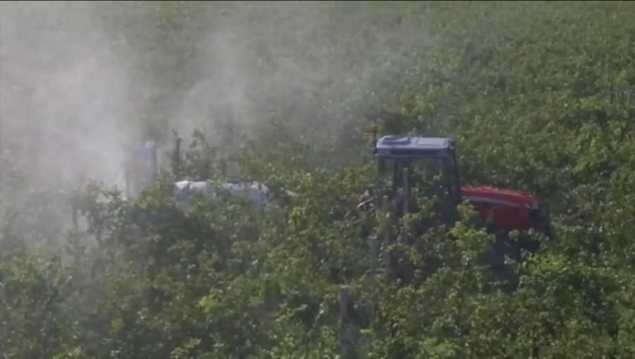 Skąd pozostałości pestycydów w owocach z sadów ekologicznych?