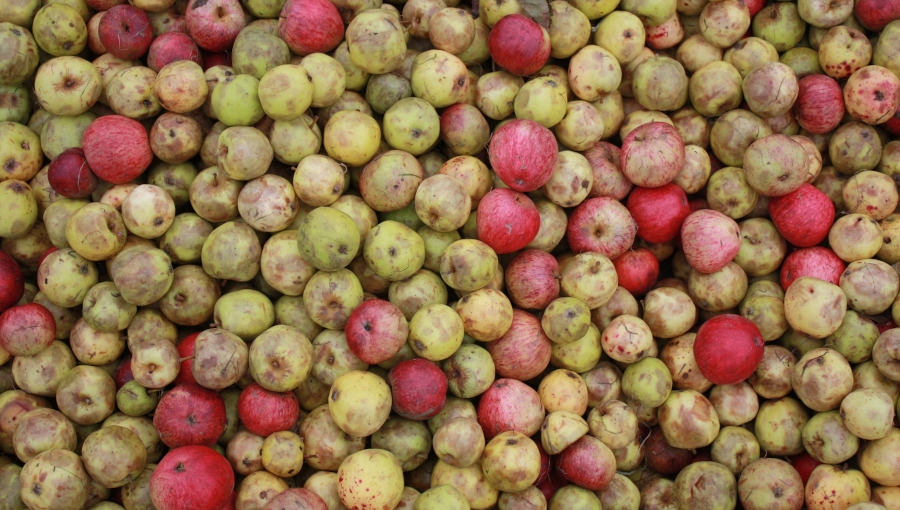 Presja przynosi skutki - wzrost cen jabłka przemysłowego, 12 X 2020