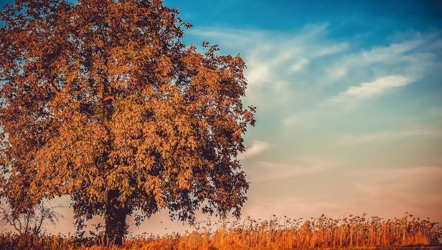 Kiedy można wyciąć drzewo bez zezwolenia?