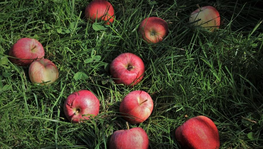TOP 6 chwytów przetwórni na zbijanie cen owoców