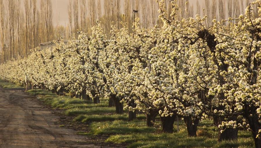 Atraktanty na czas kwitnienia - które z nich naprawdę działają?