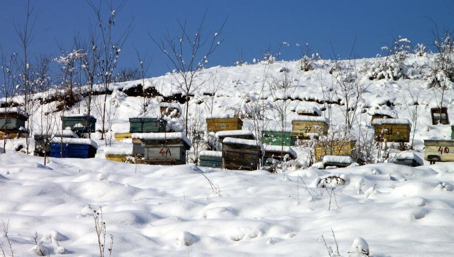 Pszczelarze martwią się o przezimowanie pszczół