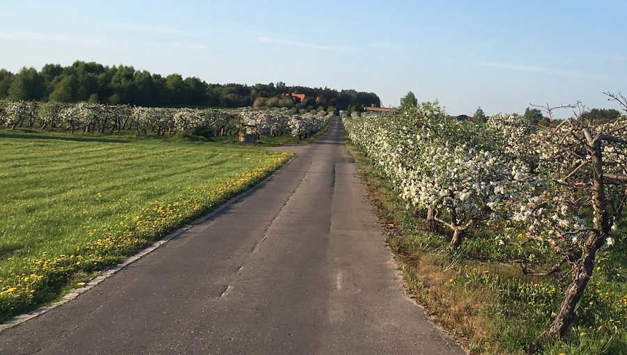 Jak utwardzić drogi główne w sadzie?