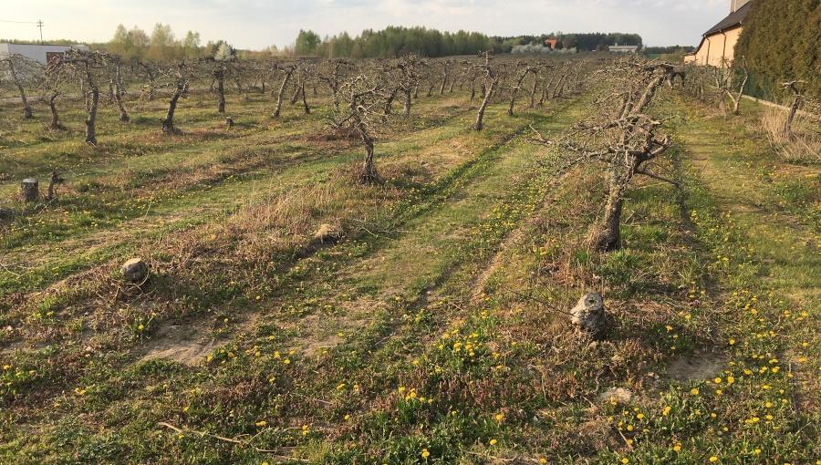 Sad po sadzie i uzupełnianie wypadów - zapobieganie zmęczeniu gleby