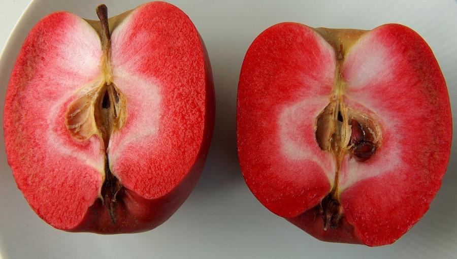 Czerwonomiąższowe odmiany jabłoni - niewykorzystana szansa?