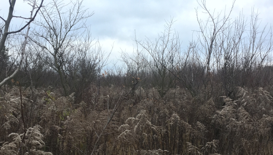 Jak przywrócić teren pod zaniedbanym sadem do użytkowania?