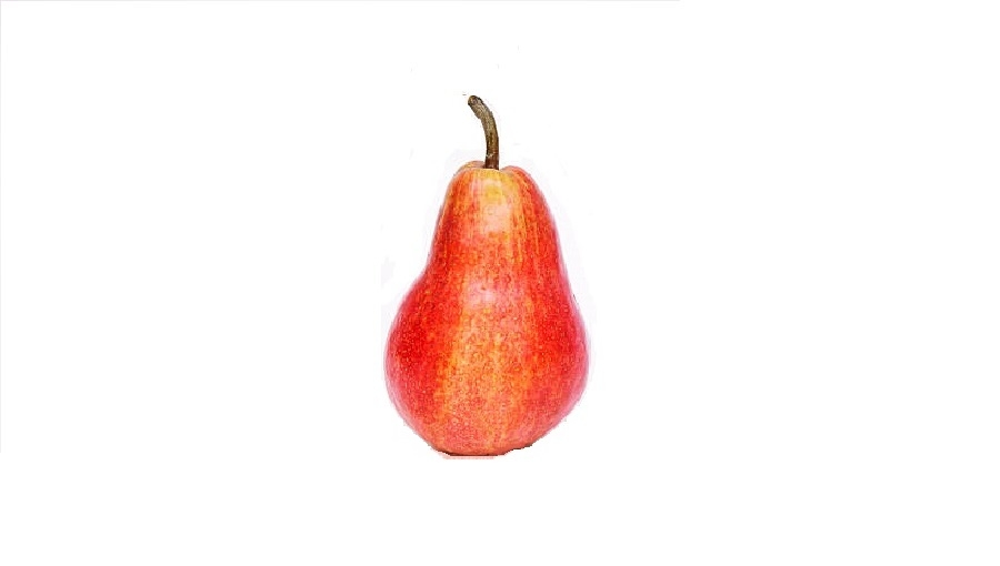 Odmiany grusz o paskowanych owocach