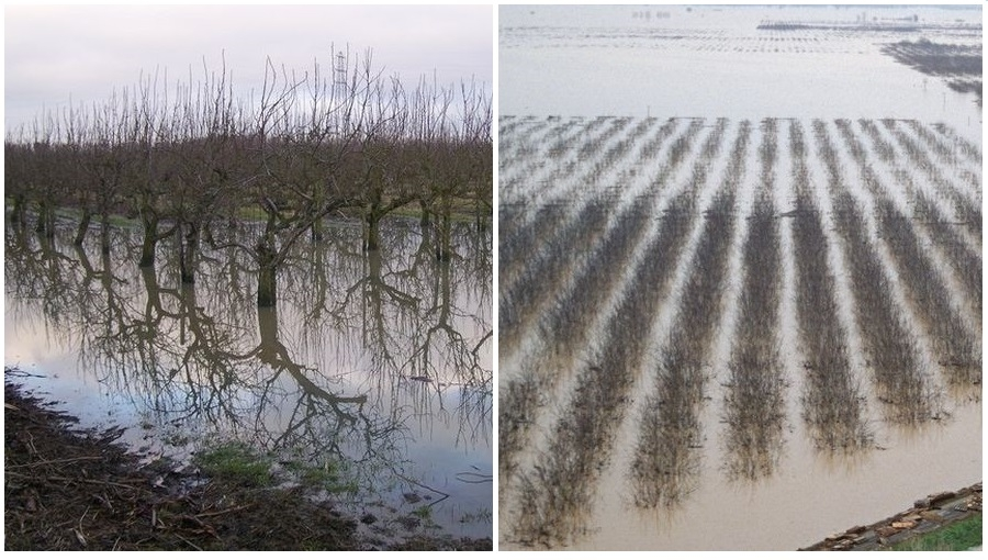 Komunikat sadowniczy, 23 VIII 2021 - sady i plantacje podczas ulewnych deszczy