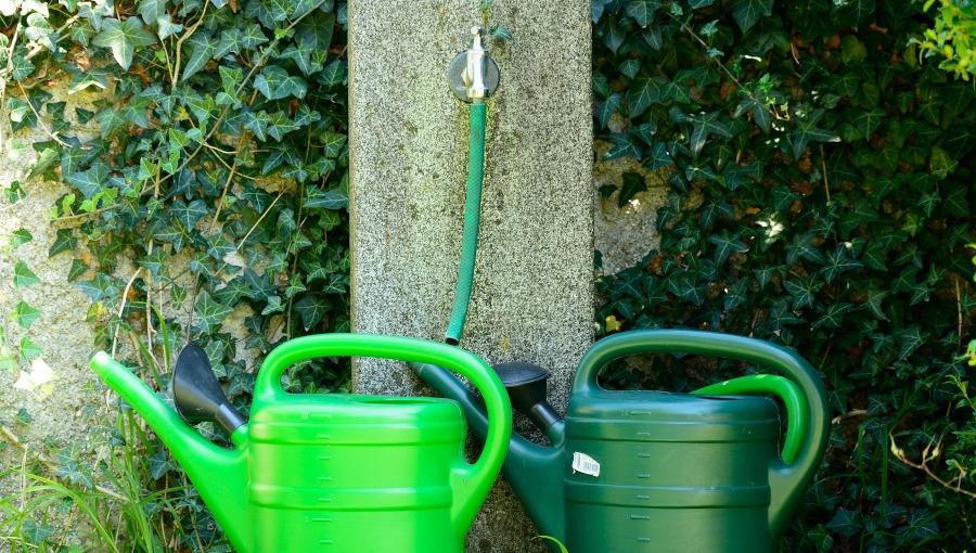 Które rośliny ogrodowe podlewa się przed zimą, a których nie?