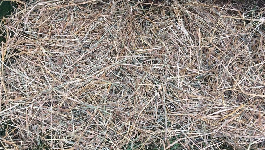 Zabezpieczanie roślin sadowniczych przed zimowymi mrozami