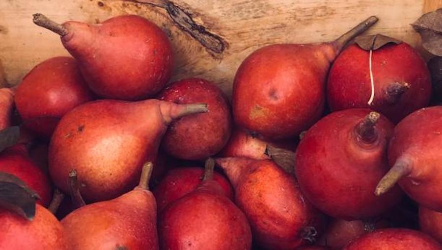Konsumenci nie chcą czerwonoowocowych odmian grusz