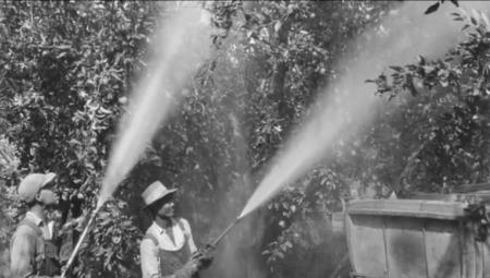 Arsen w sadownictwie - negatywne skutki odczuwalne do dzisiaj