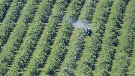 Czy dokarmianie azotem po zbiorach obniża mrozoodporność drzew?