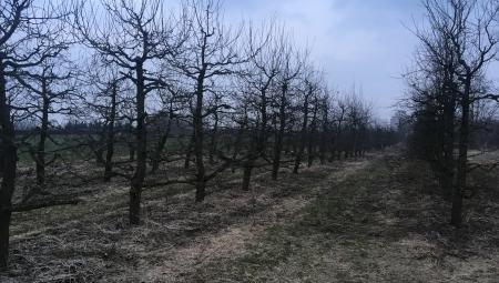 Które nawozy i kiedy można rozsiewać tylko w rzędy drzew, a które na całości sadu?