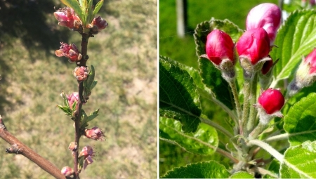 Czy przymrozek uszkodził pąki i kwiaty? - temperatury krytyczne