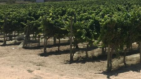 Agrotechnika gleb zwięzłych - rozluźnienie przed założeniem sadu i dalsza uprawa
