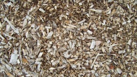 Czy zrębka z gałęzi po cięciu podnosi ryzyko chorób kory i drewna?