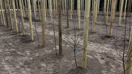 Nawożenie azotem w pierwszym roku po posadzeniu drzew i krzewów owocowych