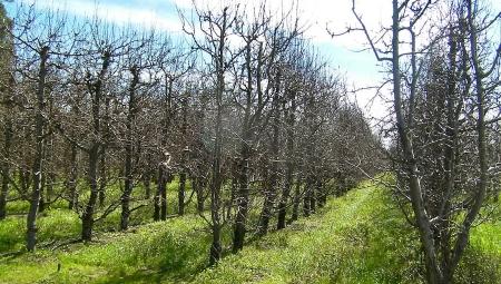 Jak poprawić mrozoodporność roślin przed zimą?