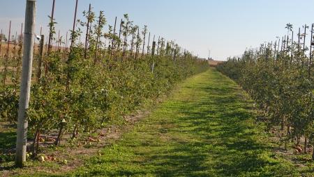 Perspektywy rynkowe dla odmian odpornych na parch jabłoni