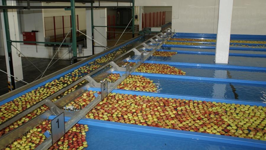 Przegląd cen jabłek deserowych, 08 I 2021. Czy warto otwierać chłodnie KA?