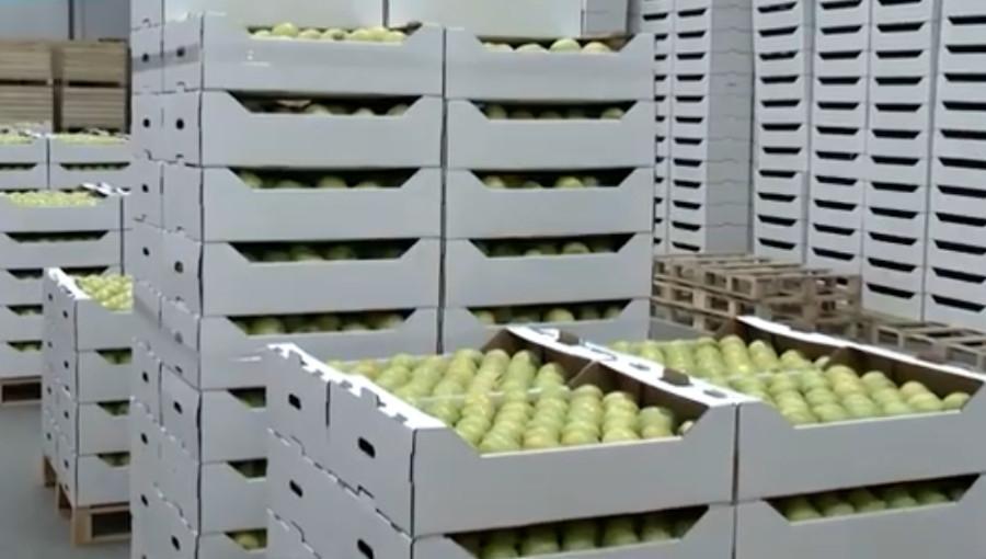 Jak długo przechowywać jabłka? Stopniowa wyprzedaż zamiast czekania do końca sezonu? - analiza sytuacji z pięciolecia