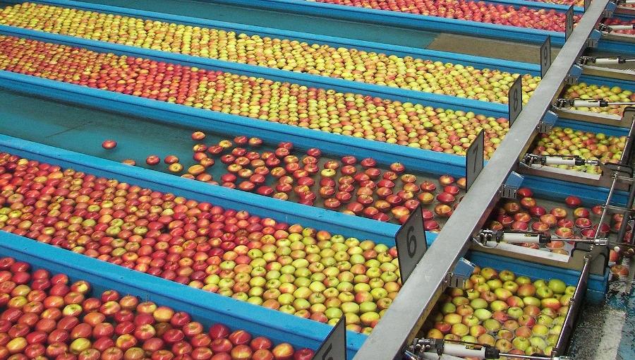 Przegląd cen jabłek deserowych na sortowanie i w sprzedaży za wagę w skrzyni, 12 III 2021