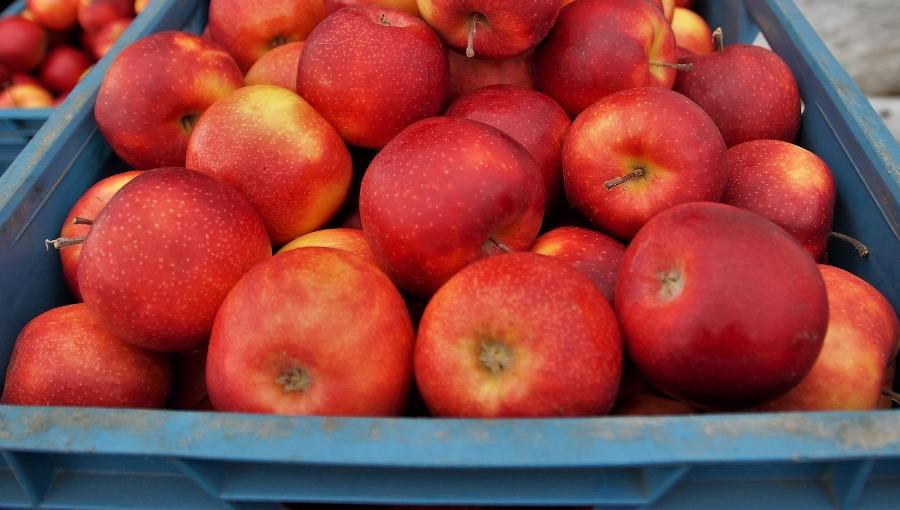 Ceny jabłek deserowych poniżej oczekiwań, 12 X 2020