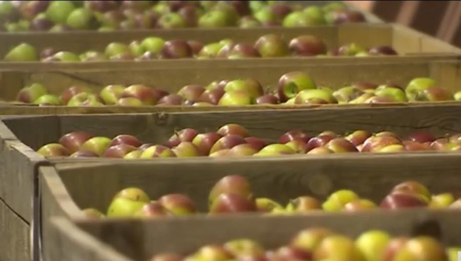 Styczeń podniesie ceny jabłek na rynkach hurtowych?