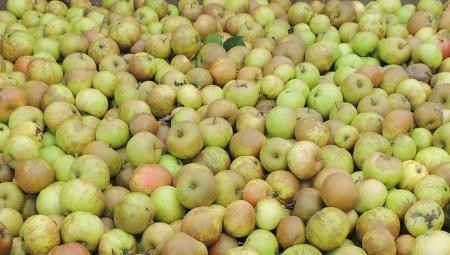 Wyraźne spadki cen przemysłu. Co dzieje się na rynku jabłek przemysłowych?