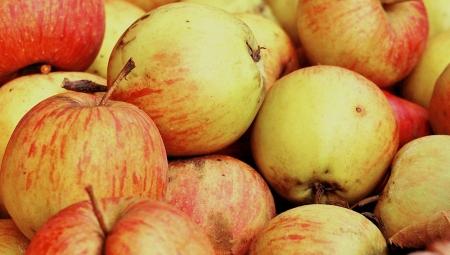 Listopadowe spadki cen jabłek przemysłowych, 02 XI 2020