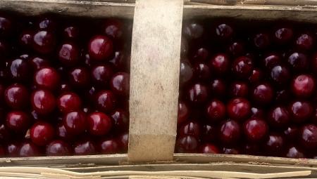 Długi okres podaży wiśni na rynkach - jakie ceny we wrześniu?