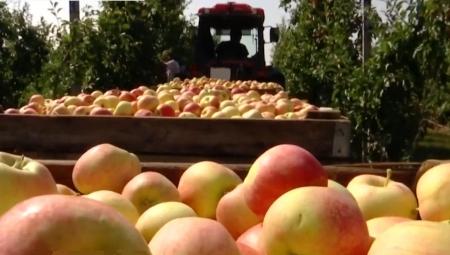 Jabłka deserowe - ceny za wagę w skrzyni, 28 X 2020
