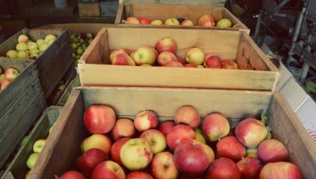 Przegląd cen jabłek deserowych na sortowanie i w sprzedaży za wagę w skrzyni, 17 II 2021