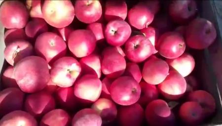 W dobie kryzysu zagraniczny protekcjonizm i ochrona własnych rynków będzie przeszkodą dla polskich jabłek