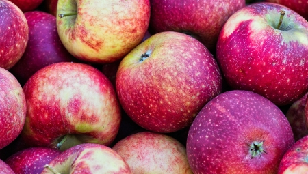 Jabłka na rosyjskim rynku droższe niż w Polsce!