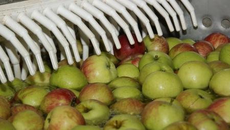 Ceny skupu jabłek deserowych nie zmieniły się od 20 lat!