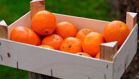 Przegląd hurtowych cen owoców południowych, 26 I 2021