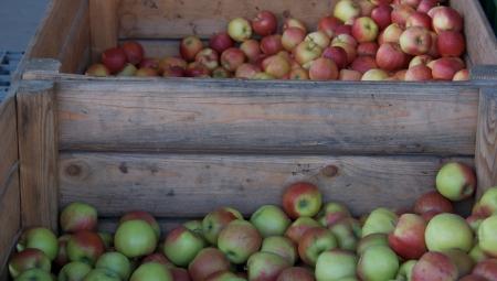 Podsumowanie handlu jabłkami z chłodni zwykłych w sezonie 2020/2021