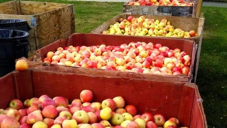 Ceny jabłek i gruszek w grupach producenckich, 16 XII 2020