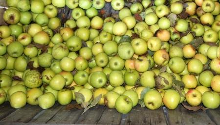 W 2. poł. sezonu jabłka przemysłowe mają podobne ceny jak przed rokiem - zestawienie, III 2021
