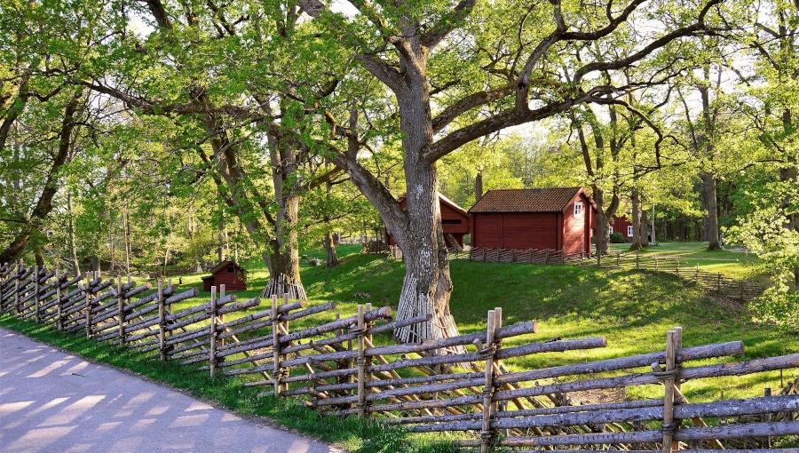 Gdy gałęzie drzewa wystają poza ogrodzenie... Czy możemy je wyciąć?