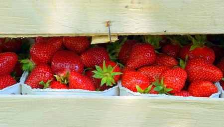 Jak zawierać umowy na dostawy produktów rolnych?