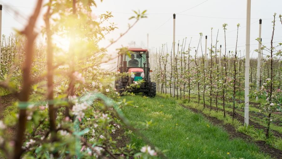 Jak Europejski Zielony Ład zaszkodzi polskiemu sadownictwu?