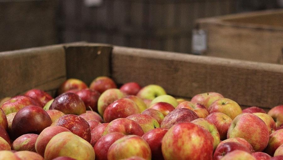 Spółka Appol ukarana za opóźnianie płatności za jabłka