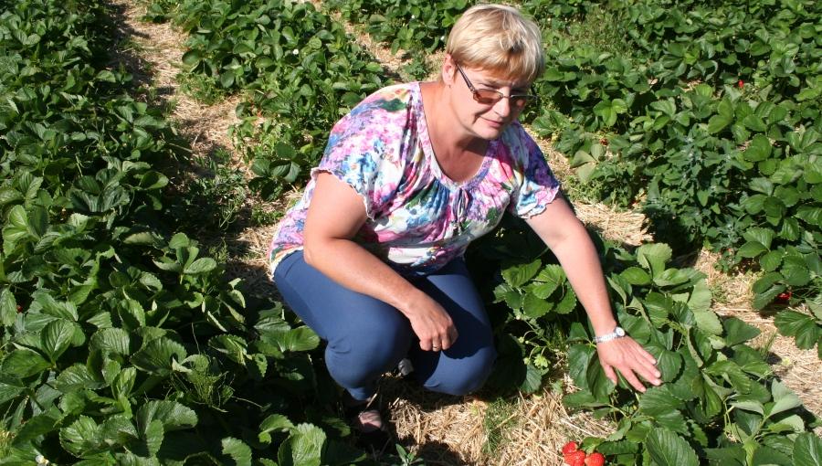 Poprawić jakość owoców jagodowych, zwiększyć konsumpcję