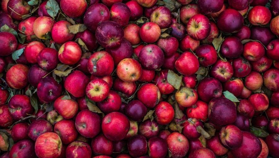 Jutro protest sadowników przeciwko spadkom cen skupu jabłek deserowych!