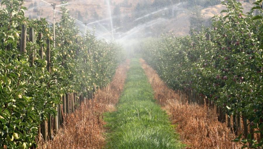 Wczesną wiosną 2021 nie będzie suszy? Czy wzrosną zbiory w skali kraju?