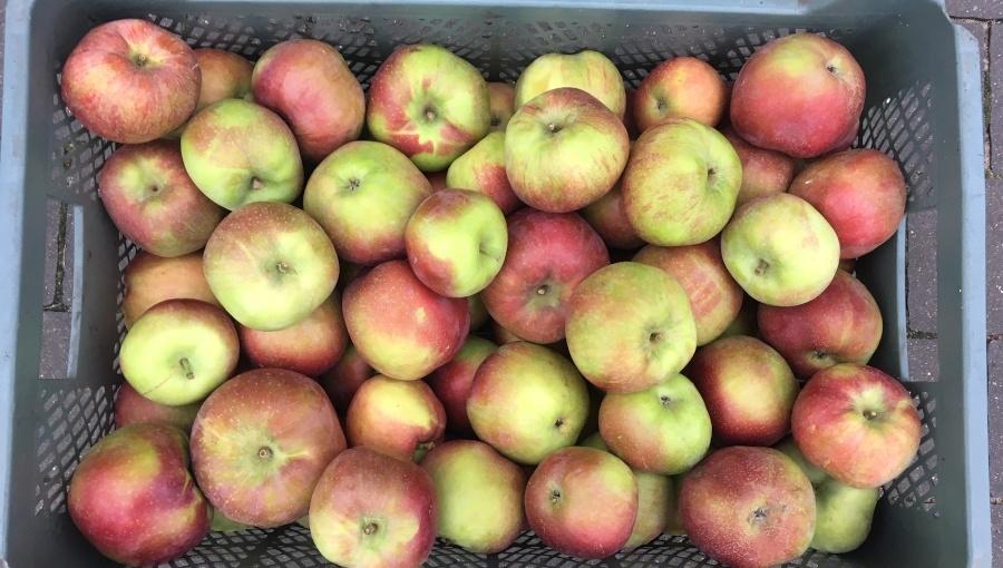 Sadownik darmo oddawał jabłka dzieciom. Skończyło się problemami z izbą skarbową i sprawą w sądzie