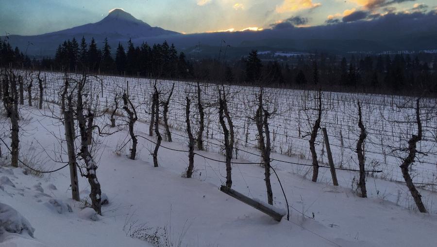 Idą mrozy i śnieżyce - ostrzeżenia IMGW [mapa]. Jak zabezpieczyć rośliny?